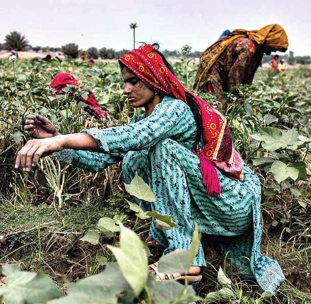 Innovative farming practices have been adopted in Punjab agriculture