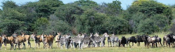 South Luangwa National Park in Zambia has the highest concentration of wildlife