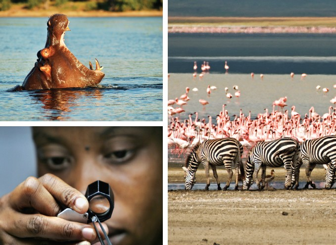 Botswana is well known for some of the best wildlife reserves and the most important natural resource - diamonds