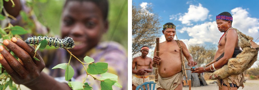 (Left) Multi-coloured Mopane worms are part of the local delicacy of San people;(Right) San men making weapons;