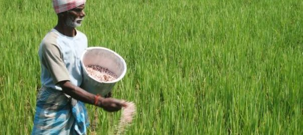 As it is the start of the winter cropping season in India, the government also announced a palliate money withdrawal process for farmers to ensure smooth supply of seeds and fertilisers