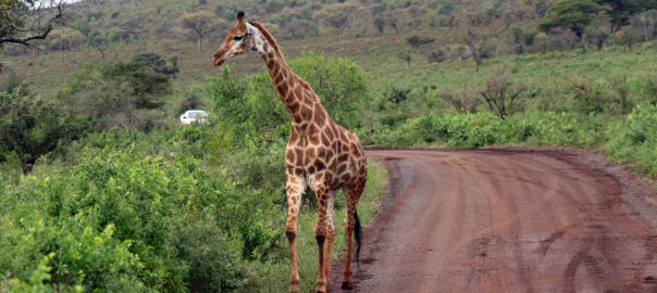 South Africa is still fairly new and exciting for the Indian traveller