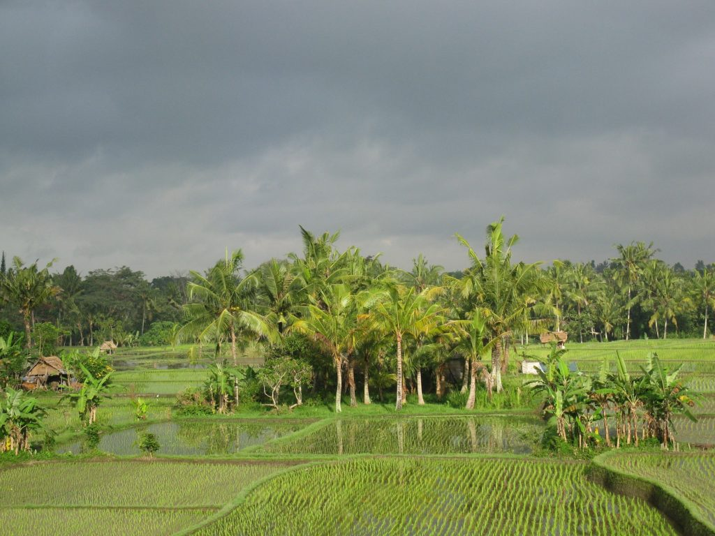 Rural Andhra Pradesh is colourful, vibrant and rich in natural beauty and culture