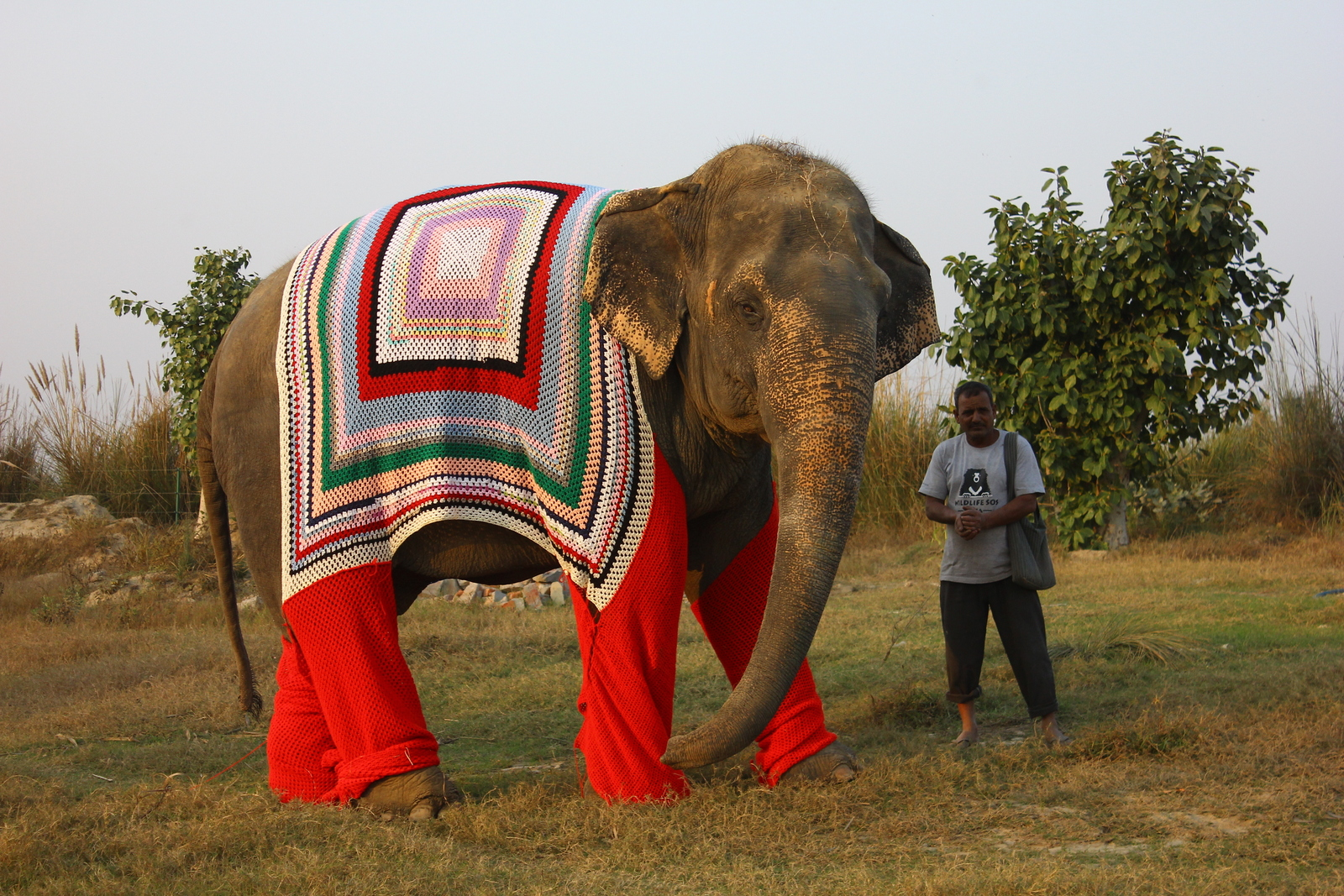 rescued-elephant-bijli-out-on-a-walk-with-her-keeper-at-the-wildlife-sos-elephant-conservation-care-center-mathura