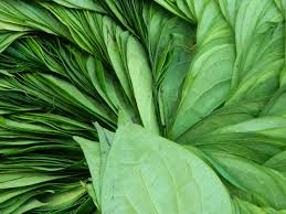 paan-leaves