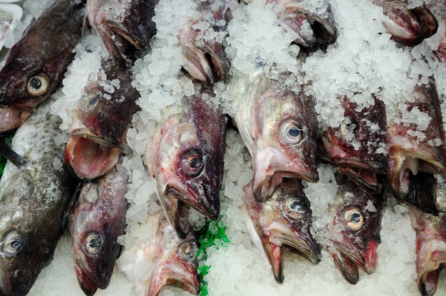 Fish not freshly caught if consumed can lead to health hazzards