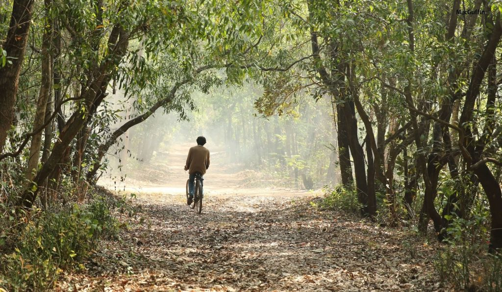 The smoky woods in a scene from A Death in the Gunj