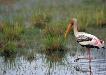 Migratory birds in Delhi this winter