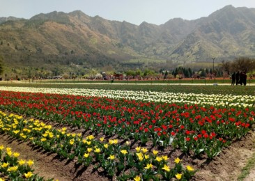 Srinagar: From flowing water to flowing flowers