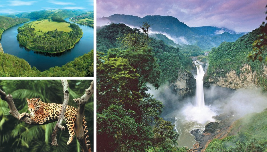 (Clockwise) Jaguar spotted in Amazon river basin; bird 's eye view and front view of Amazon Rainforest