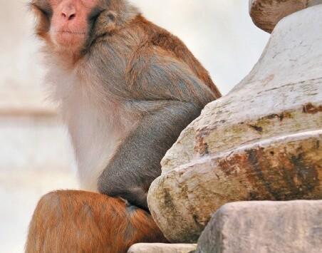 Une manière originale de protéger les animaux dans le Nord de l'Inde