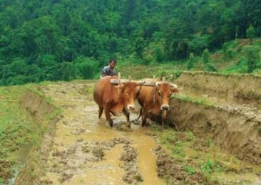 Sikkim, objectif : 100% Organique