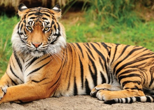 Blue Bulls, Monkeys and Wild Boars killed in India
