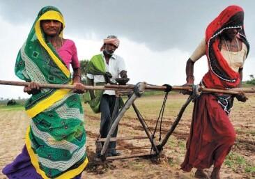 Agriculteurs : le suicide en dernier recours