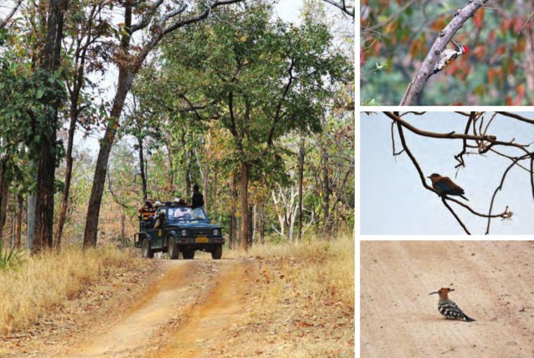 Im Uhrzeigersinn von links: Touristen bahnen sich auf einer Safari ihren Weg durch den Park; ein Specht tut, was er am Besten kann; ein Baumhopf
