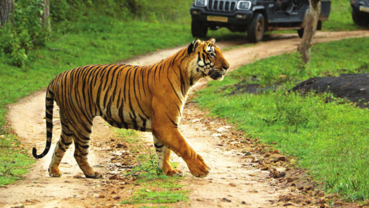 Bandipurs Tigerreservat