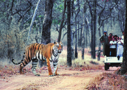 Jungle Safari in the Jim Corbett National Park