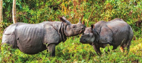 Jaldapara Nationalpark, Westbengalen