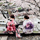 Cherry blossoms fill Japan with beautiful imageries