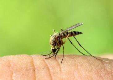 Monsoon in Delhi brings Dengue outbreak fears