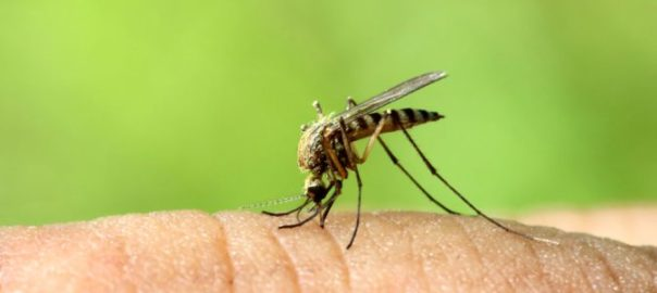 The fear of dengue outbreak is revived in the capital