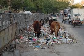 Delhi garbage
