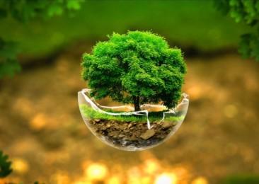 Delhi government aims at establishing 42 Eco-forests