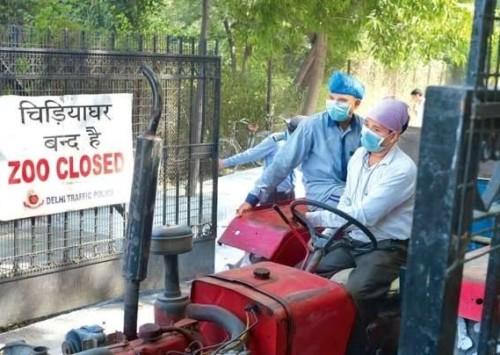 Migratory birds in Delhi this winter