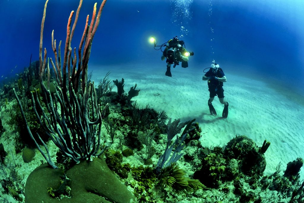 The islands and surrounding seas are alive with an amazing diversity of flora & fauna and very beautiful underwater scenes and marine life