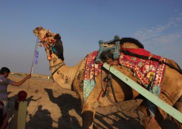 Planning of a desert festival: behind the scenes of Rann Utsav