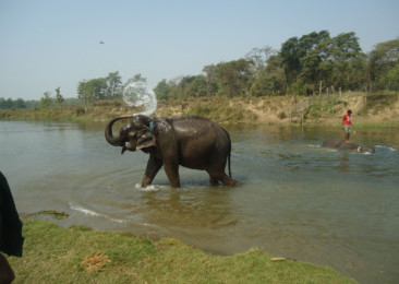 Gentle jumbos to enthrall tourists in Nepal