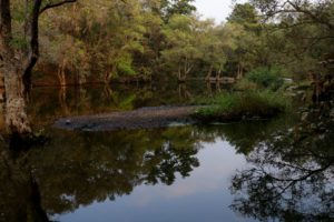 Water bodies reflect the lush green trees of Polo forest