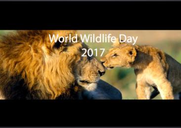 Wildlife's Unsung Heroes