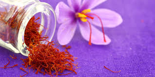 Saffron: An ancient Indian medicine
