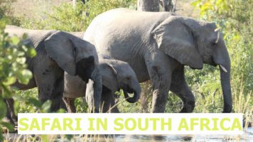 A Safari Experience in South Africa