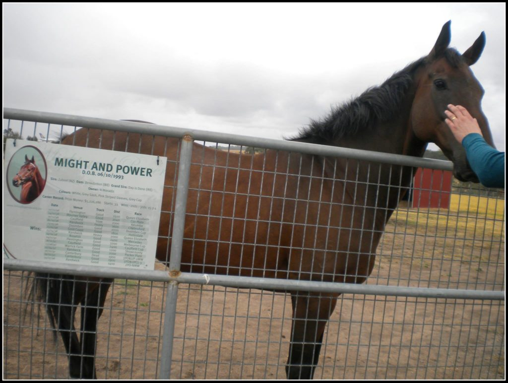 Might and Power - the most celebrated champion horse at the Living Legends