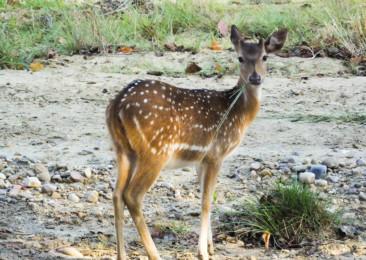 Jungle Safari in the Jim Corbett National Park