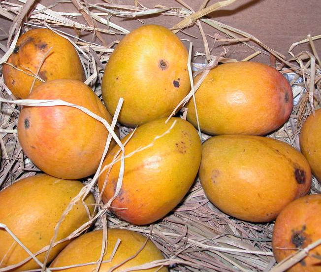 alphonso_mango