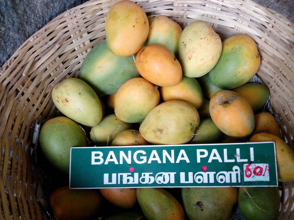 mango_banganapalli_variety