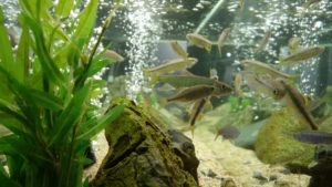 Aquariums in living rooms are helpful for positive energy