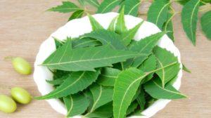 neem-leaves-uses-625_625x350_41444631794