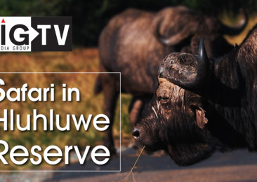 One day safari in Hluhluwe Reserve