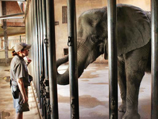 Meet the Elephants at Sedgwick County Zoo