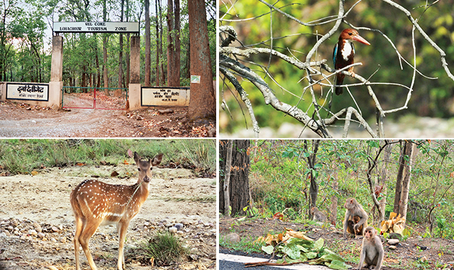 Clockwise from top left: Entrance to the Jim Corbett National Park; Durga Devi zone at the park; Jim Corbett is home to over 600 species of birds; The population of Asiatic elephants has increased significantly in the region; Monkeys in and around the park prefer to stay in groups; Spotted deer inside the reserve