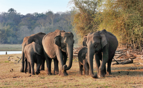 In places where elephants are worshipped, people have killed them, raising a cause for worry
