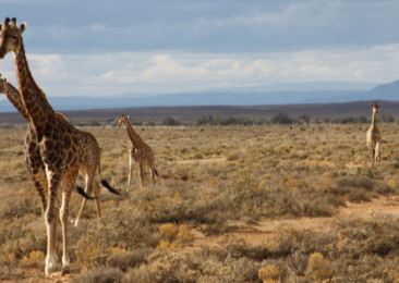 South Africa's wilderness now on Google Street View