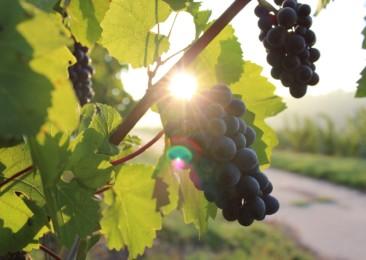 Take a wine break in Karnataka
