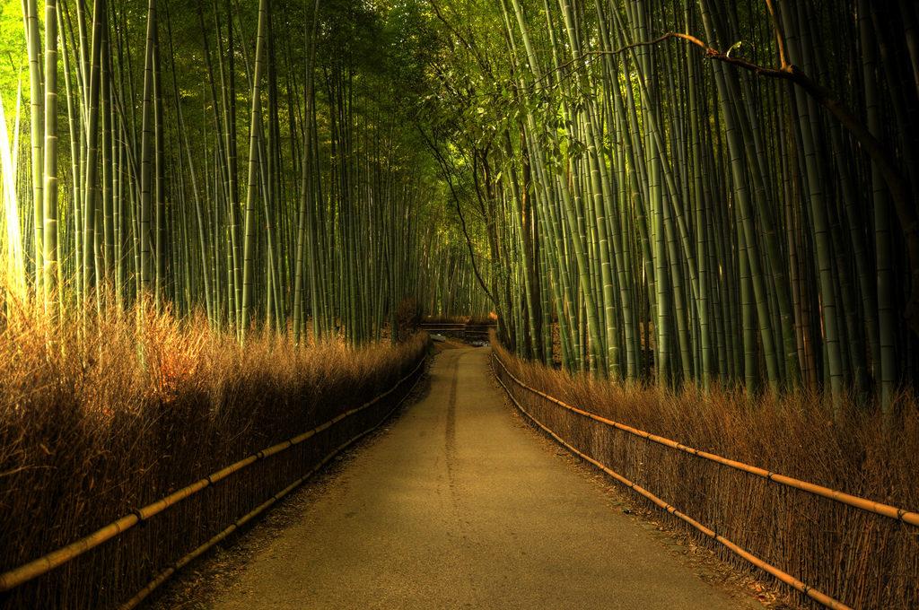 sagano-bamboo-forest-japan-weijie