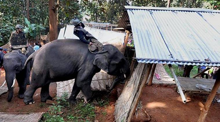 Elephants being used by the ranger to destroy houses in the sanctuary (Source- Reuters)
