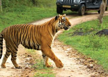 La reserva de tigres de Bandipur
